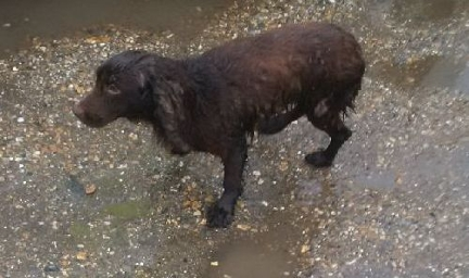 Lost dog found at caravan site